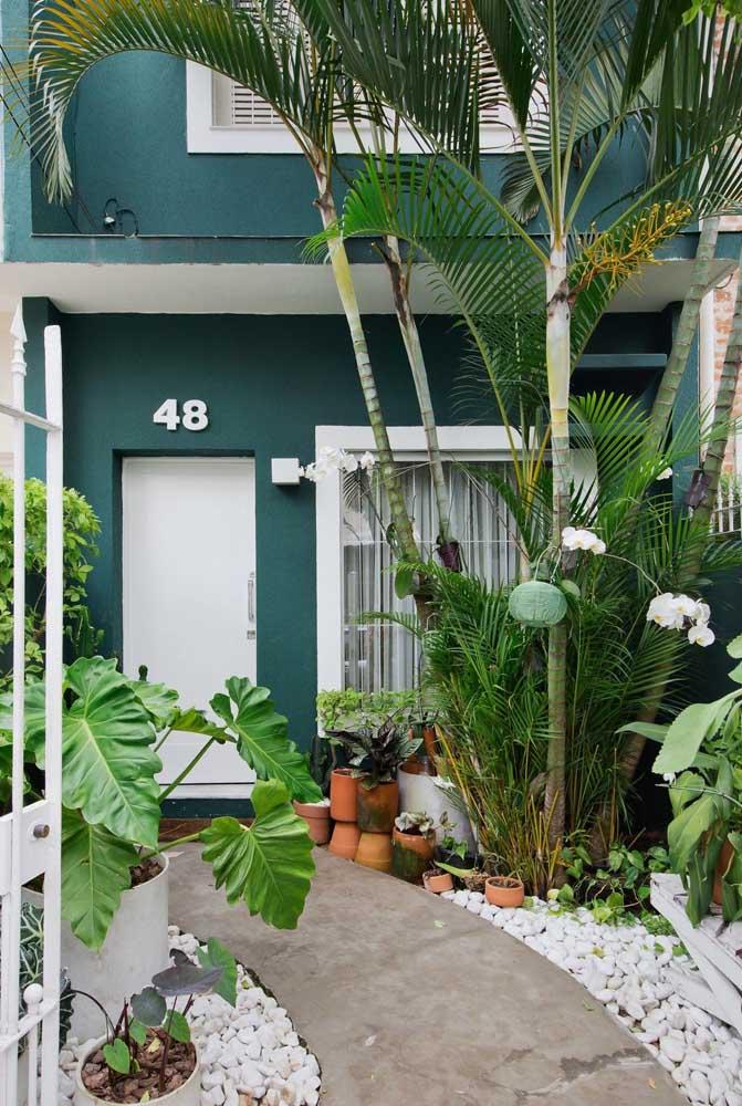 Jardim tropical para a fachada da casa simples e popular