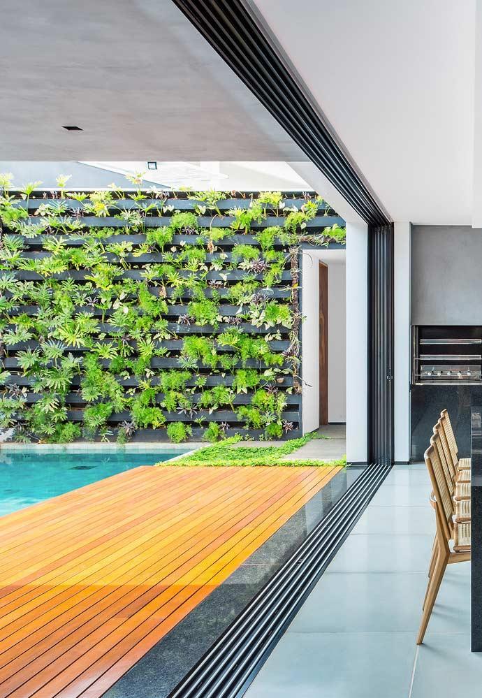 Plantinhas na parede