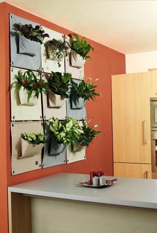 Plantas ornamentais para cozinha