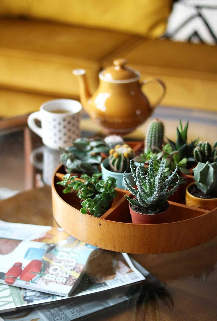Um mini jardim dentro de casa