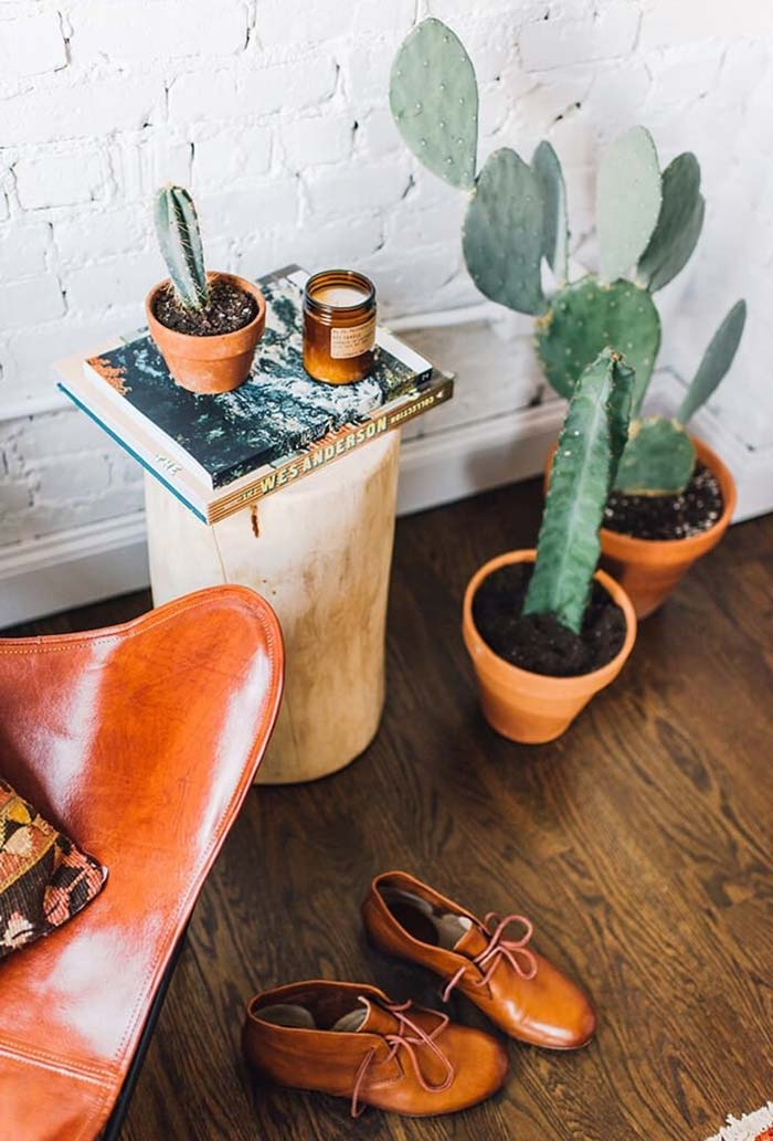 Combine os vasos das suas plantas