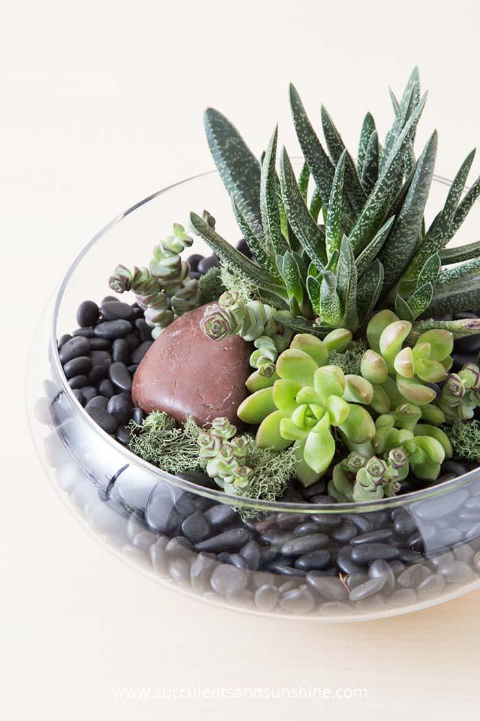 Pedras ajudam a compor a decoração do terrário