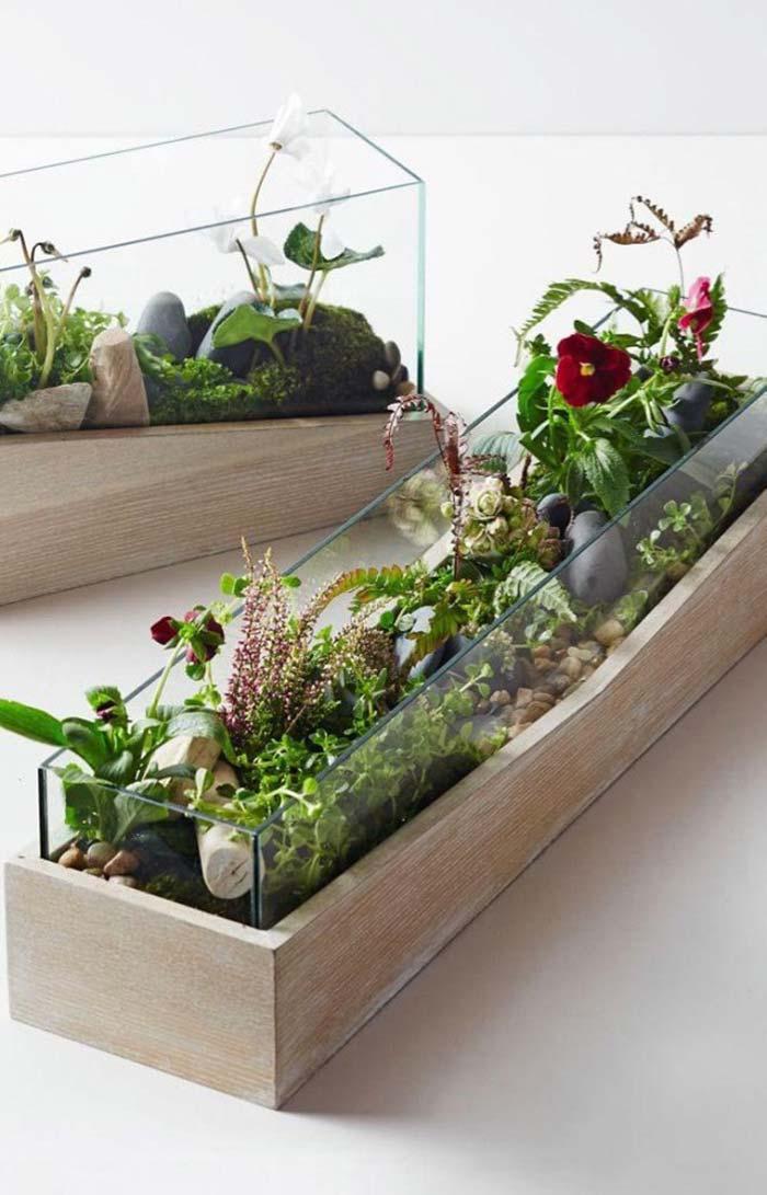 Terrário retangular permite acomodar uma variedade maior de plantas