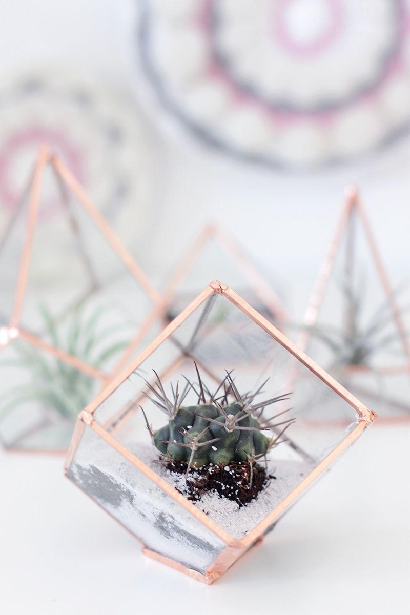 Para deixar seu terrário na moda, use recipientes em formato de prisma