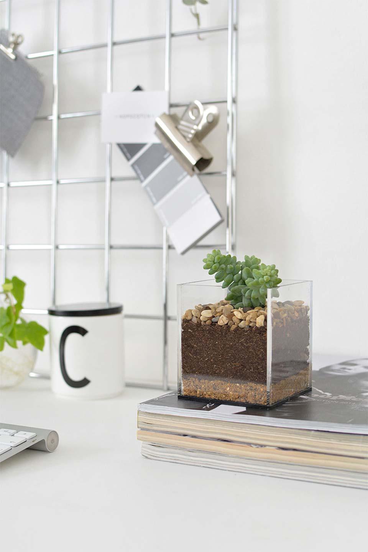 Deixe sua cozinha mais bonita e verde com um terrário