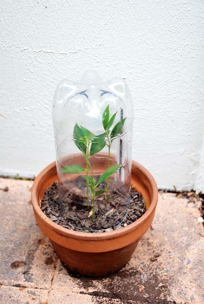 Artesanato com garrafa pet para proteger plantas