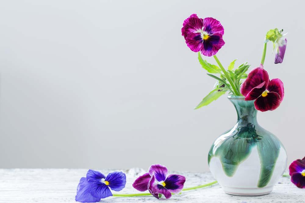 Como cuidar de violetas no vaso