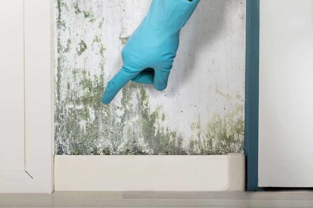 Como tirar mofo da parede passo a passo