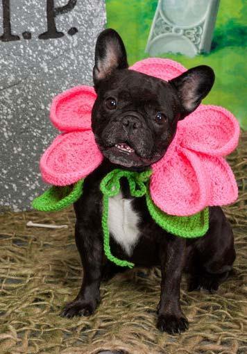 Flores de crochê para pets
