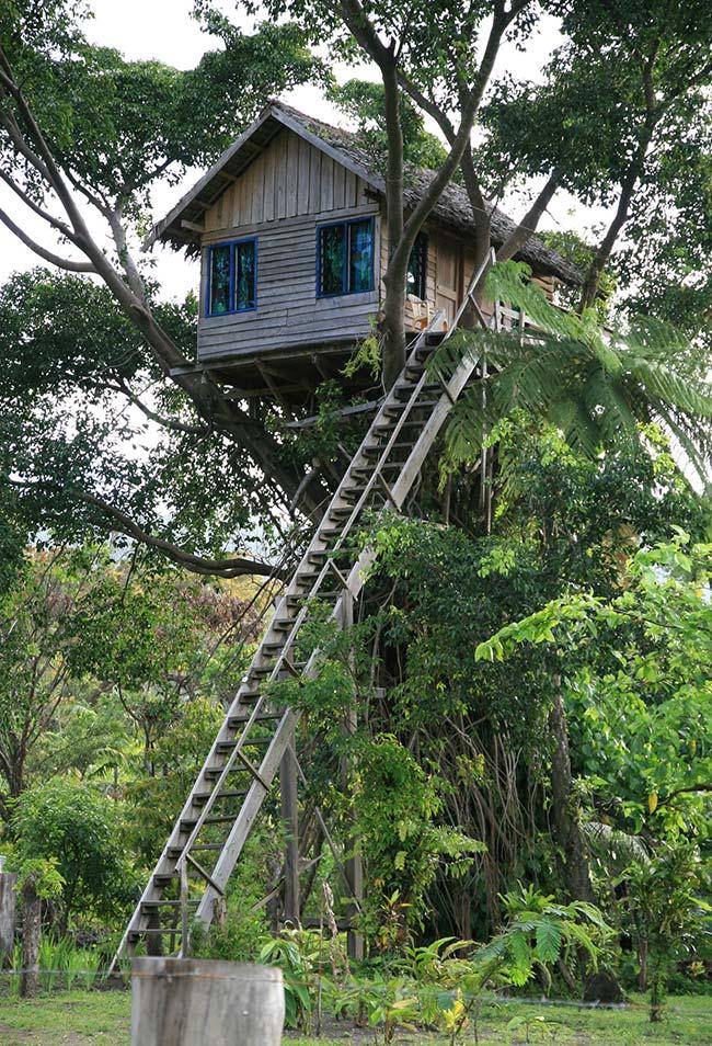 Escolha a árvore mais alta para uma casa na árvore incrível com uma vista privilegiada