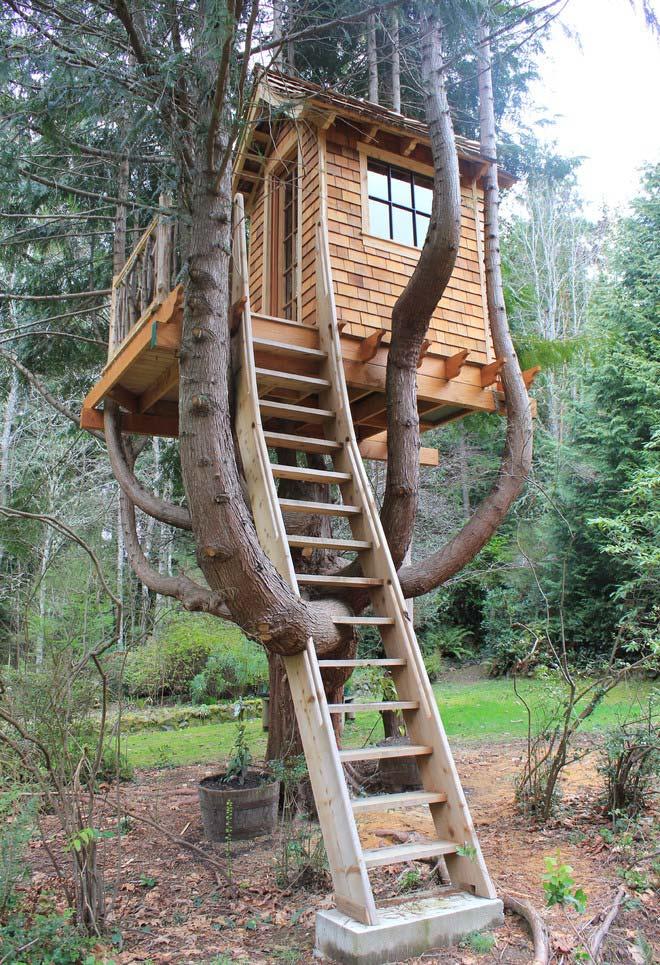 Casa na árvore de madeira