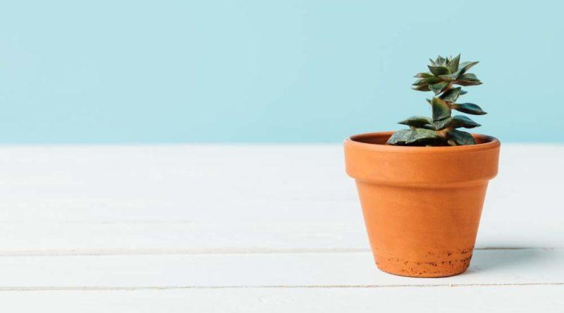 Como plantar suculentas: conheça o passo a passo e dicas essenciais