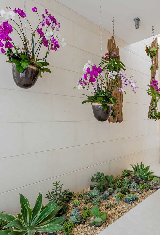 Esse jardim suspenso de orquídeas é para levar qualquer um aos suspiros; o jardim de suculentas abaixo também não deixa a desejar e complementa o espaço verde da casa