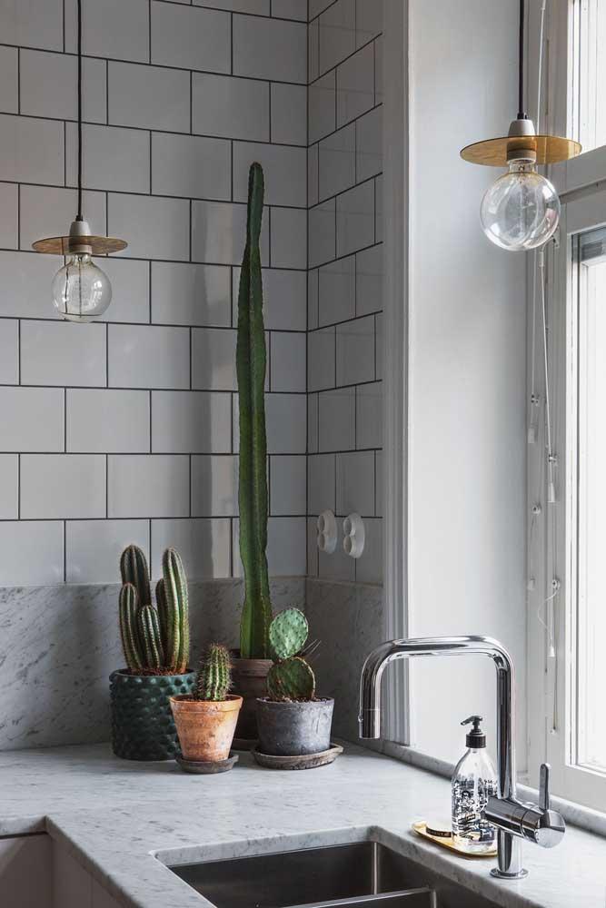 O cacto é uma planta excelente para cultivar dentro de casa, principalmente, na cozinha recebendo um pouco de luz solar.