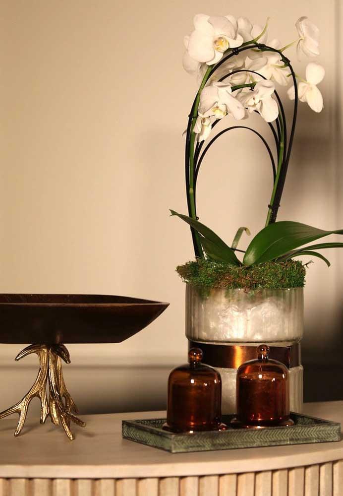 As belas e elegantes orquídeas formam um lindo contraste com o vaso de concreto