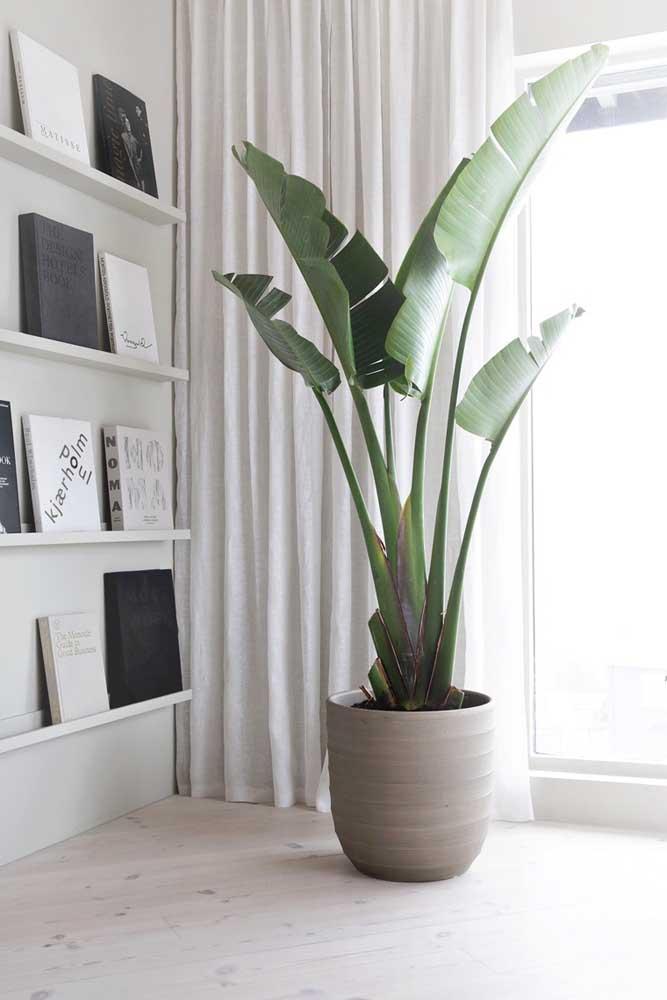 A sala ampla conta com um vaso de cimento para acomodar a bananeira de jardim