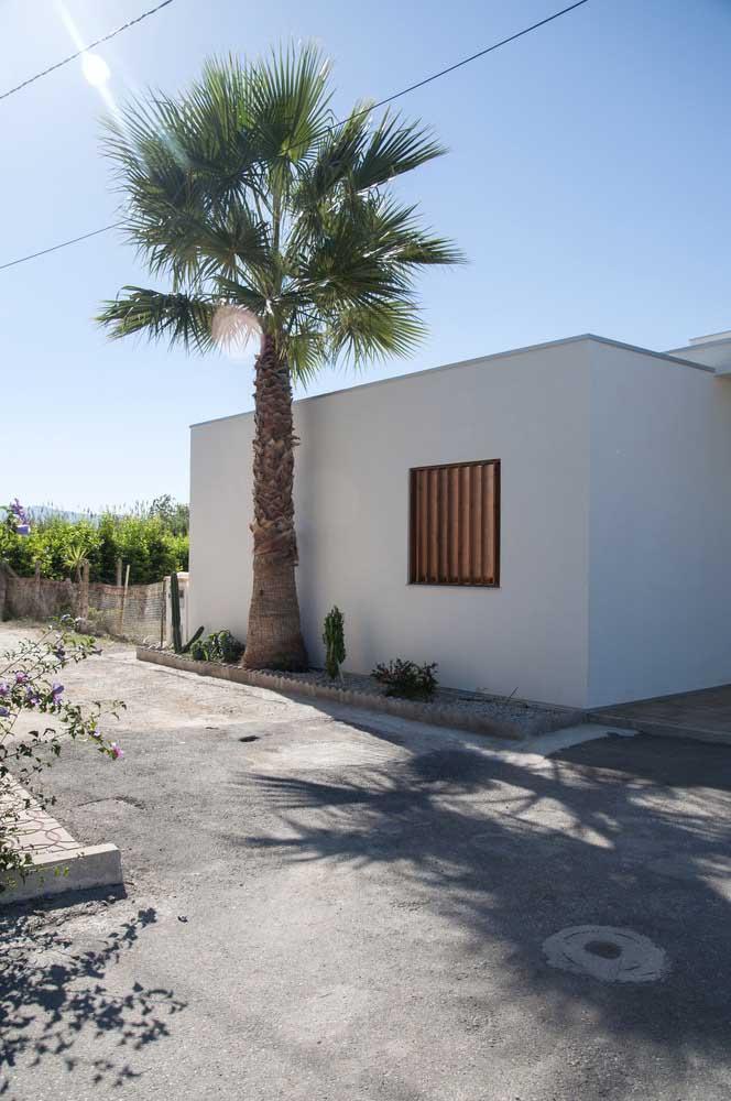 Muro de entrada de casa pequena; o diferencial aqui fica por conta do pequeno canteiro que abriga a palmeira e os pequenos cactos