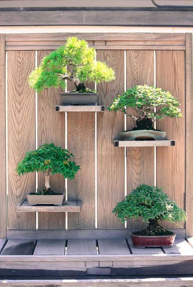 Esses bonsais se deram super bem com o lugar reservado para eles na área externa da casa