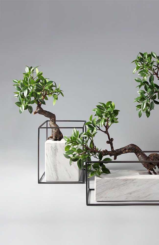 Linda ideia: bonsais em vasos de mármore
