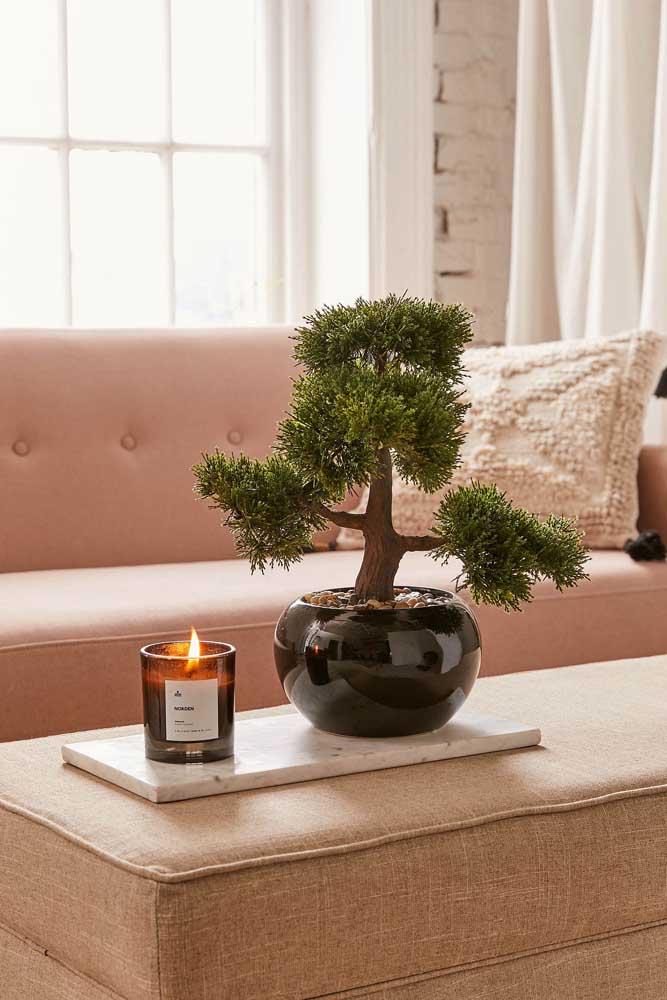 Na sala de estar, o bonsai pode ser usado sobre a mesinha de centro