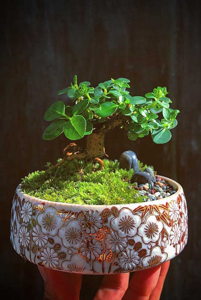 A escolha do vaso também é importantíssima para a beleza do bonsai