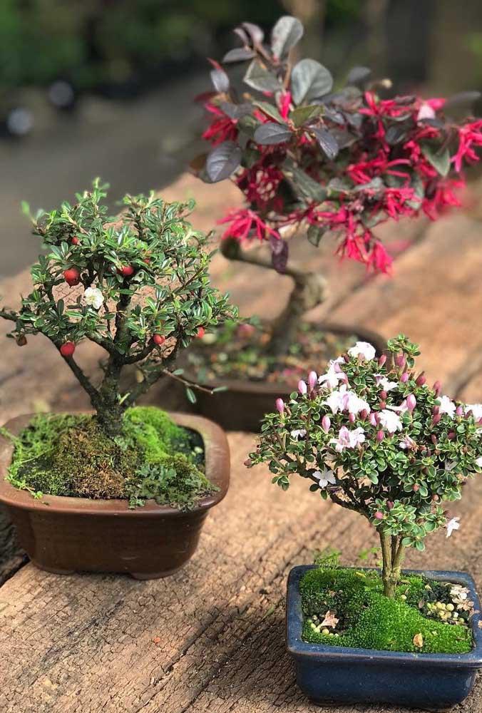 Bonsai com flores ou com frutas, qual você prefere?