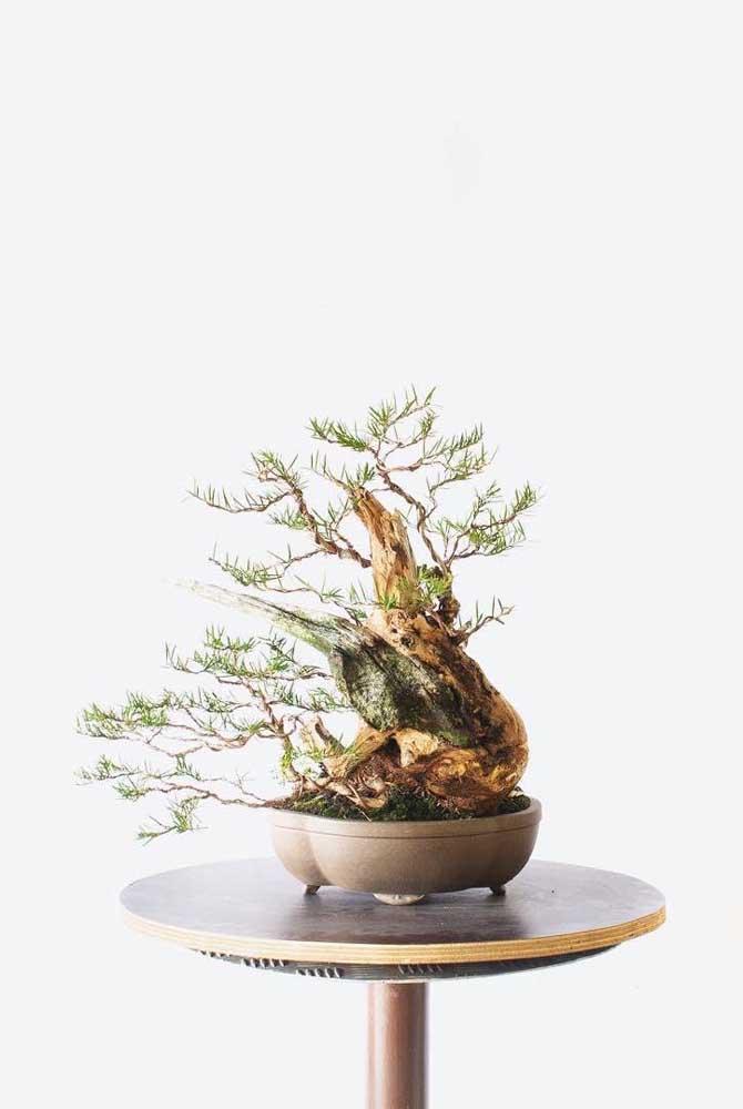 Os bonsais são obras de arte viva que fascinam e encantam a todos