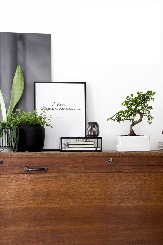 Bonsai com vaso branco para combinar com a decor moderna