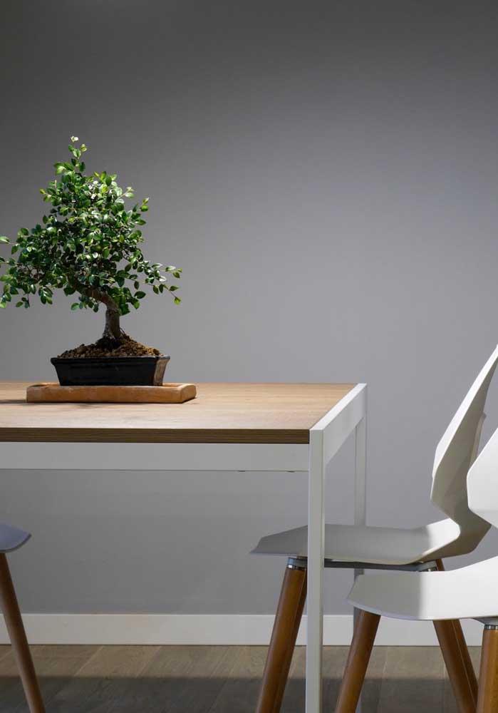 Ou quem sabe ainda você pode optar por deixar o seu bonsai decorando a mesa de jantar
