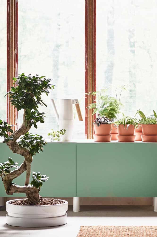 Incrível como uma árvore tão grande na natureza pode se desenvolver em um espaço tão pequeno!