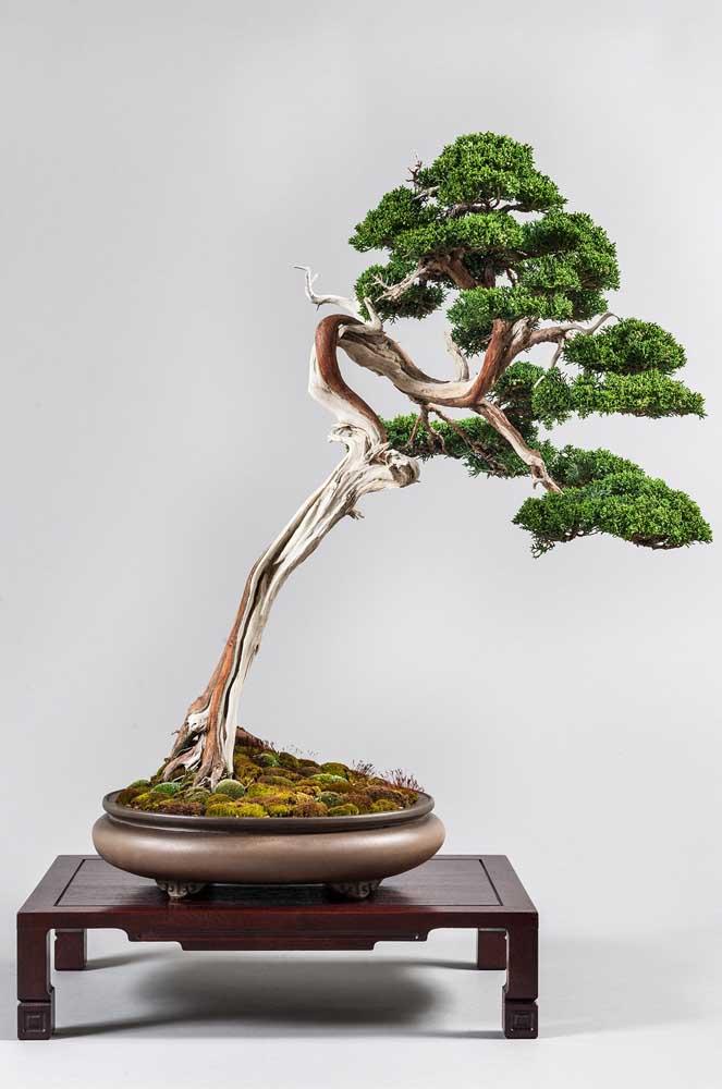Plante musgo na superfície do vaso, ele ajuda a reproduzir o habitat natural das árvores