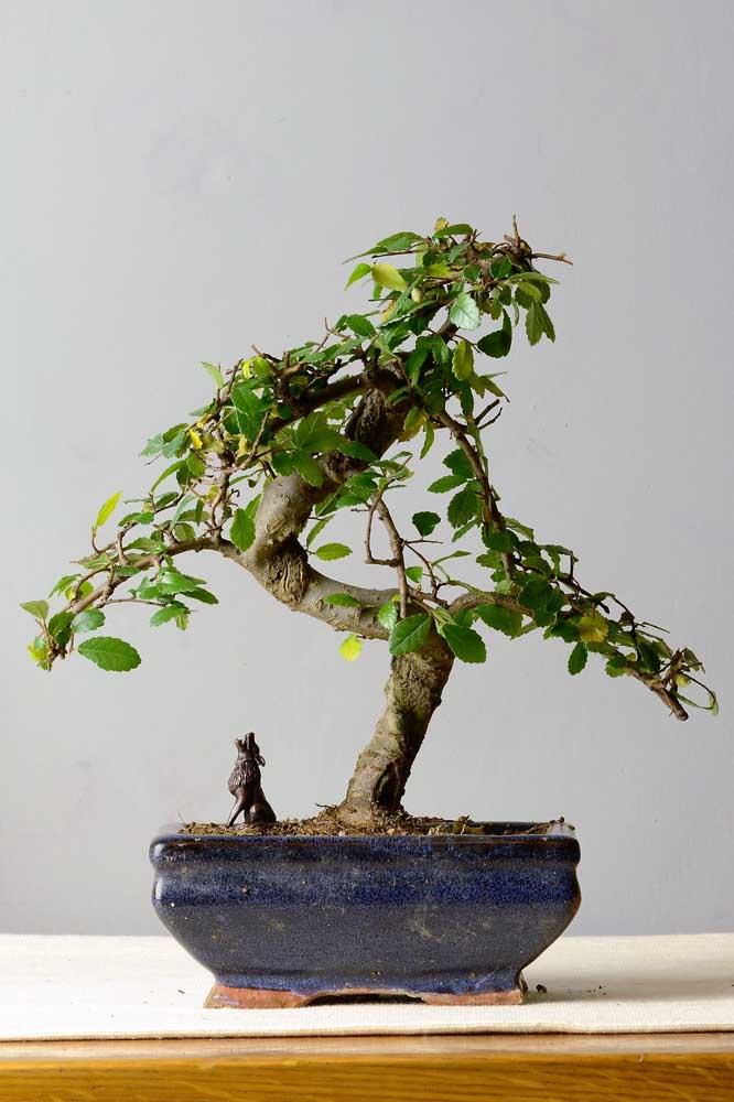 Deixe o bonsai mais realista com miniaturas de animais, pessoas e objetos