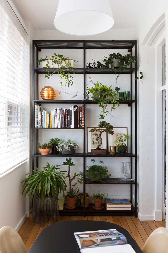 No meio de outras plantas, o bonsai também encontra seu lugar