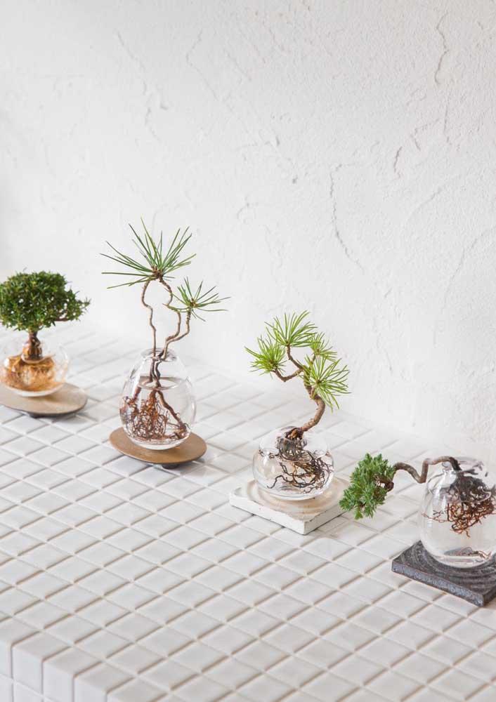 Já pensou cultivar bonsais dentro da água? Aqui, isso se mostra possível