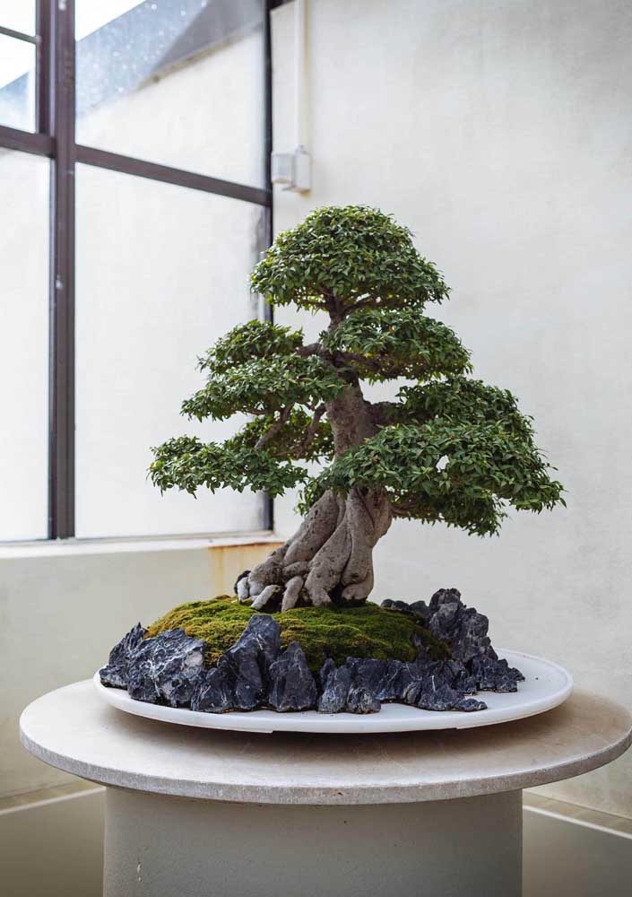 Pedras e musgos caracterizam com perfeição essa miniatura extraordinária de árvore
