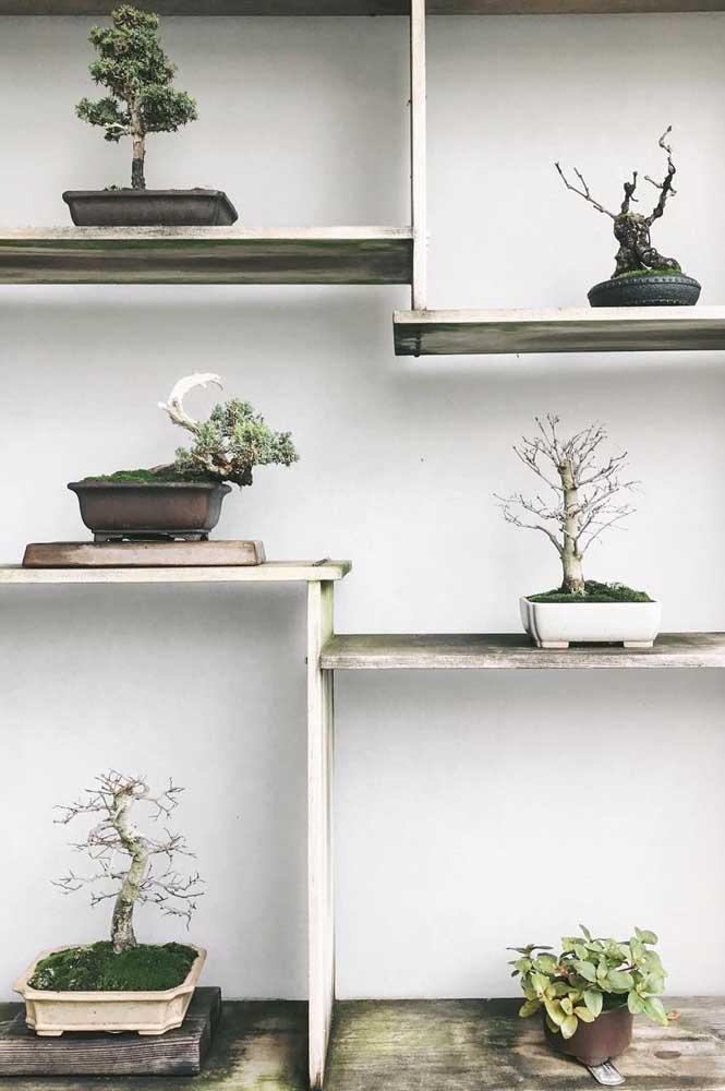Faça uma coleção de pequenos bonsais na sua casa
