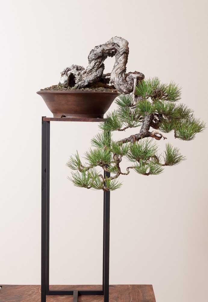 Você define a orientação e direcionamento do bonsai por meio das podas