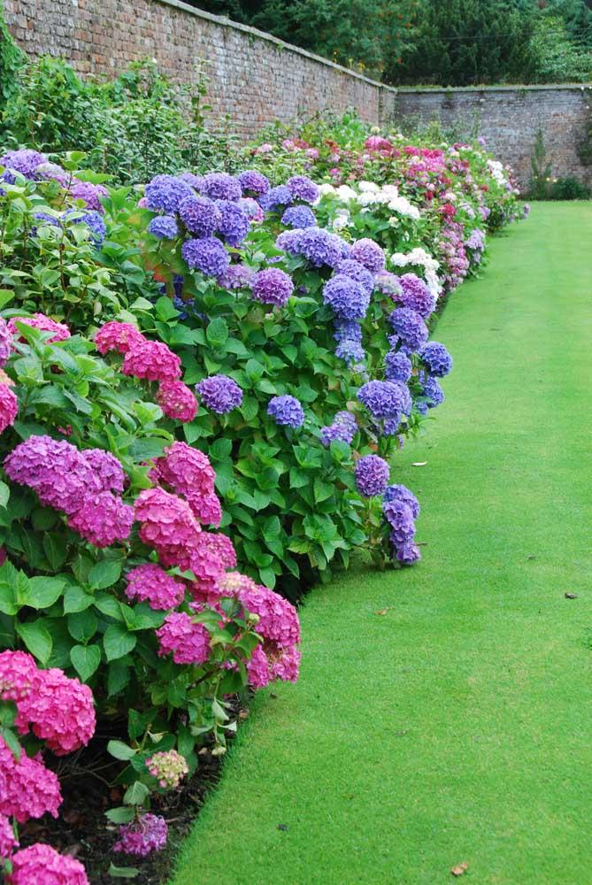 Para quem busca uma cerca viva bem florida essa é uma linda inspiração