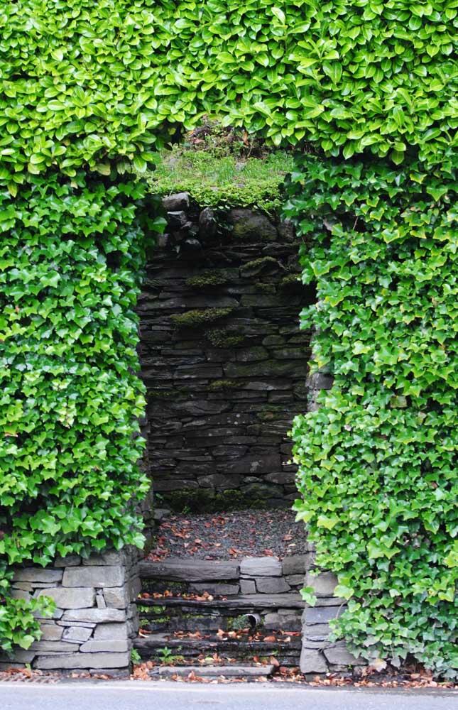 Essa cerca viva criou um verdadeiro jardim secreto para a entrada da residência