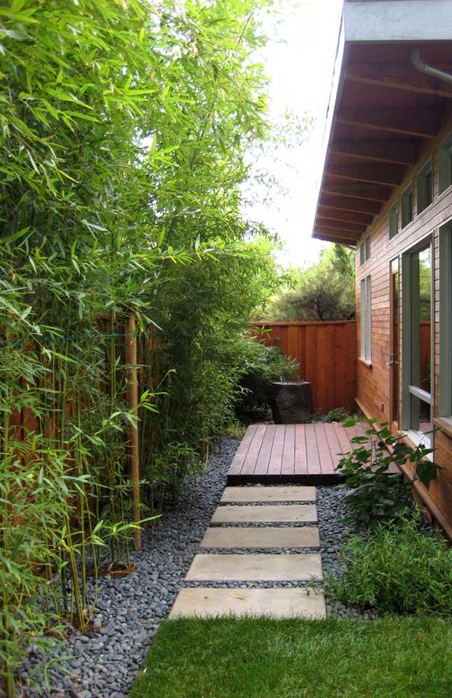 O Bambu é uma ótima opção para quem deseja uma cerca viva menos densa