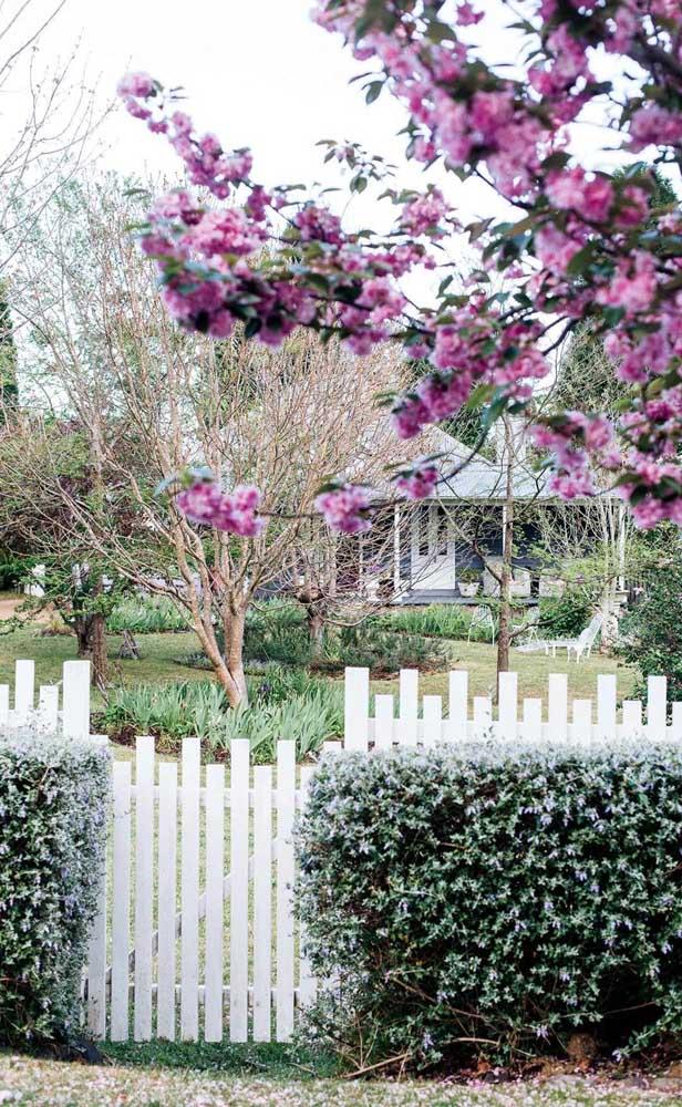 A cerca de madeira ficou levemente aparente com a cerca viva logo à frente