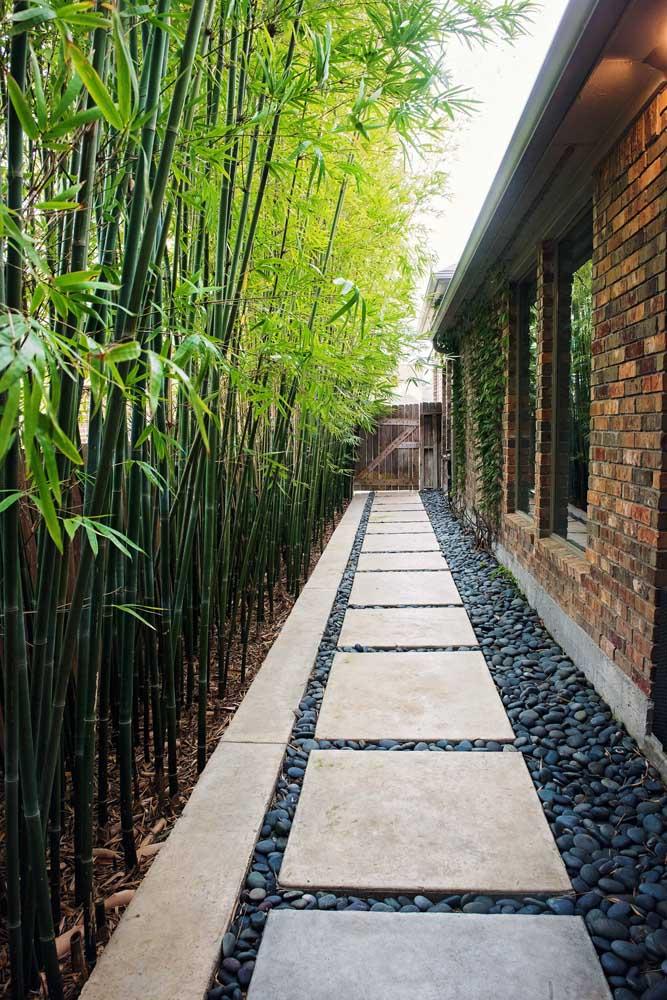 A cerca viva de bambus forma um lindo caminho verde nesse corredor