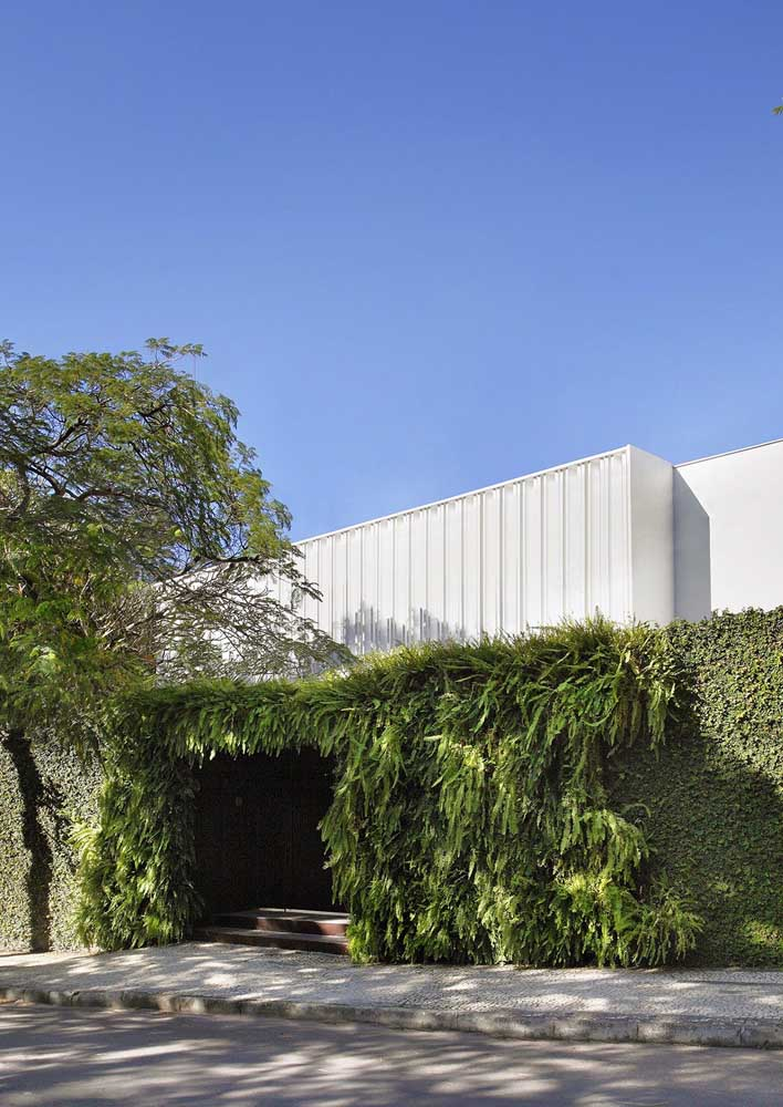 Que inspiração linda! Fachada de muro verde com jardim vertical, ideia perfeita para dar um toque natural na arquitetura da casa