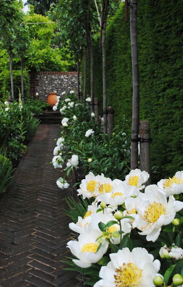 Que tal diminuir um pouco o tamanho do corredor externo para fazer um mini canteiro de flores? Você ganha um jardim onde menos imagina