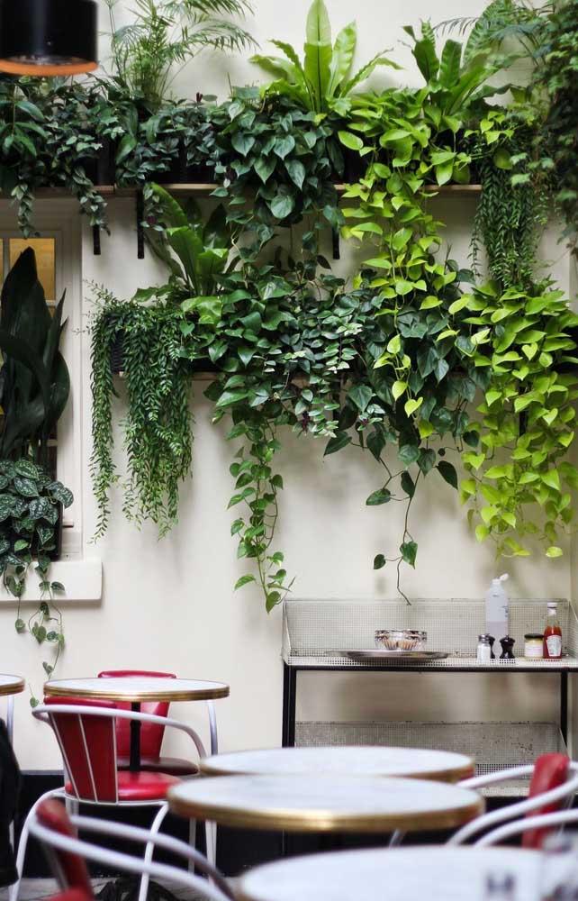 Crie volume no seu jardim vertical apostando em plantas pendentes, como a jiboia