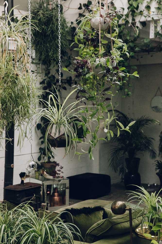 Os jardins suspensos são modernos e excelentes para quem não dispõe de uma área muito grande