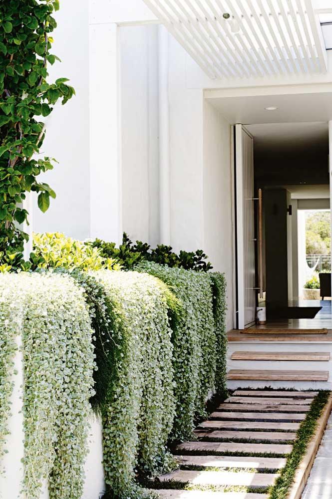 E por que não criar uma cascata verde no hall de entrada? Olha que ideia simples e linda