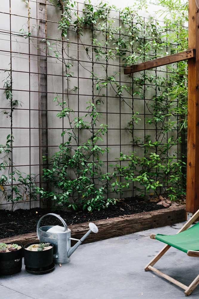 A planta trepadeira ipomeia é perfeita para colocar em grades, principalmente, porque cresce de forma rústica.