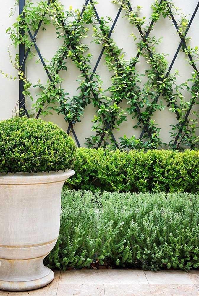 Aqui você pode usar a mesma trepadeira combinando com outras plantas para formar um belo jardim.