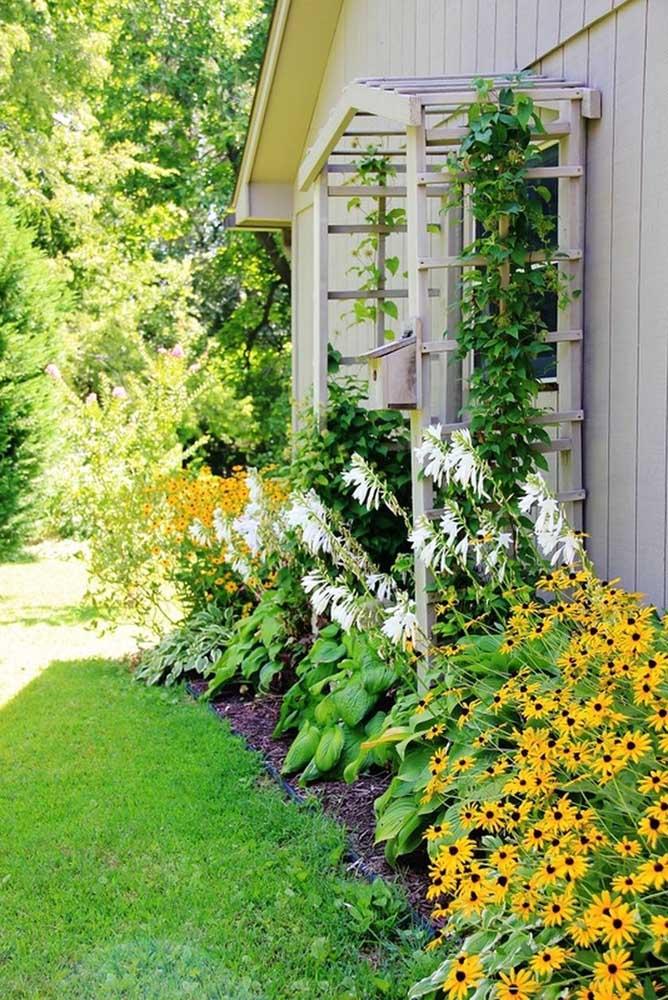 Faça uma mistura de trepadeiras, plantas e flores para deixar seu jardim lindo e florido.